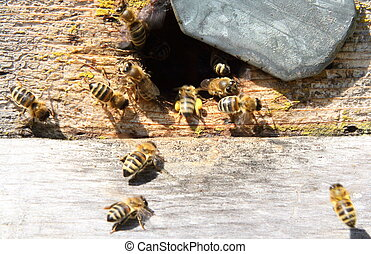 Entrance to the old hive - Beekeepers do not like to part...