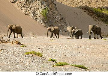 Skeleton Coast and elephants - Bleak but imposing landscape...