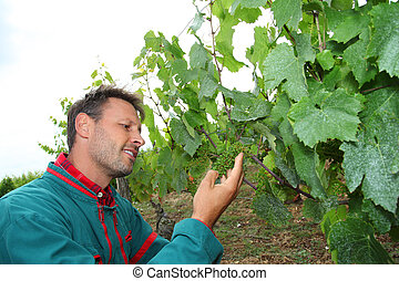 Winegrower standing in vineyard