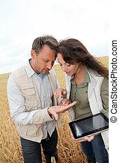 equipo, agronomists, Analizar, trigo, cereal, campo
