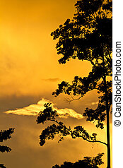 Tree silhouetted against golden sunset - Tree silhouetted...