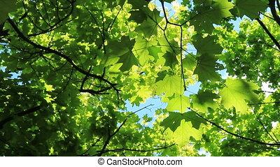 Beautiful green foliage