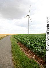 View of wind turbines in corn field