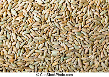 cereal grains of rye yields for crops in agriculture