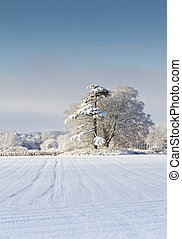 Snow Covered English Countryside - Field and woodland...