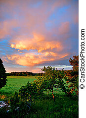 field and trees in evening light - small trees and field in...
