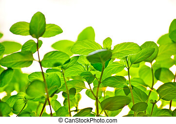 This is photograph of a colorful green leaves