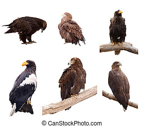 Set of eagles. Isolated over white - Set of eagles. Isolated...