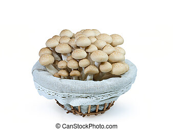 shimei with bucket - shimei of ceps in a bucket on white...