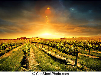 Stunning Vineyard Sunset - Beautiful Sunset over a Barossa...