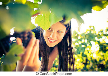Grapes in a vineyard being checked by a female vintner color...