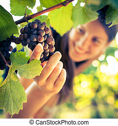 Grapes in a vineyard being checked by a female vintner...