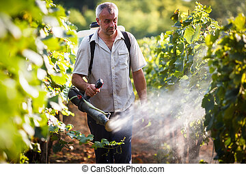 Vintner walking in his vineyard spraying chemicals on his...