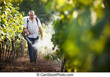 Vintner walking in his vineyard spraying chemicals on his...