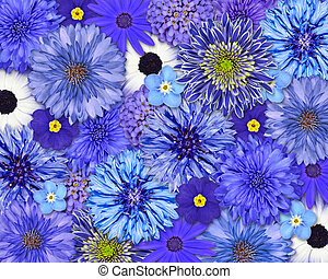 Blue Flower Background - Selection of Various Blue Flowers...
