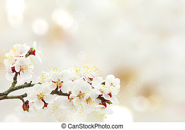 Apricot blossom represented on a light background