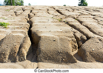 Soil erosion to overgrazing leading to desertification...