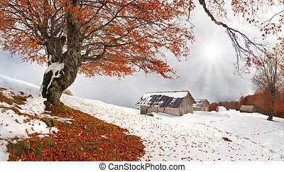 First autumn sudden snow in Carpathian mountains
