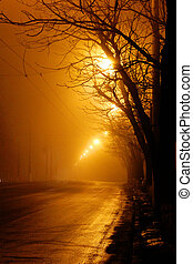 trees near the road in the fog at night