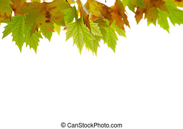 Autumnal reds leaves Isolated on white background