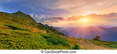 Summer landscape in the mountains. Sunset