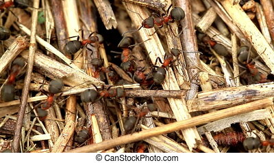Ants have a lot of work