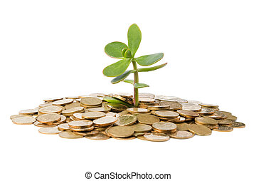Money Tree (crassula) growing from a pile of coins. Isolated...