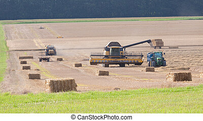 Grain Harvest - Field of grain being harvested with combine...