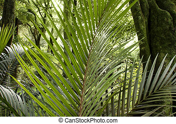 Tropical jungle forest - Lush foliage in tropical jungle