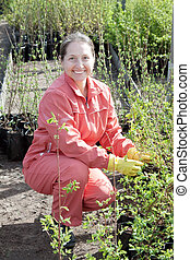 Mature woman with sprouts in pots  at plant