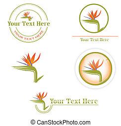 designs with Strelitzia - different designs with orange Bird...