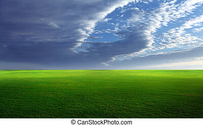 Grassy field - Grassy meadow with lush green grass and blue...