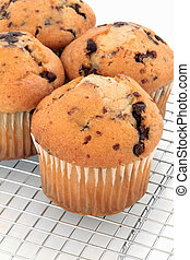 Chocolate Chip Muffins - Chocolate chip muffin cupcakes on a...