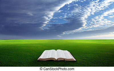 Open bible in field - Open bible in a field with green...