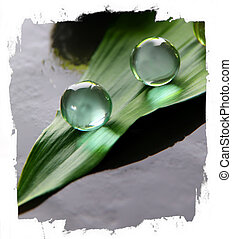 bath beads of green plant