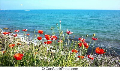 Red poppies at the sea coast