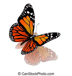 Isolated butterfly of orange color - Isolated butterfly of...