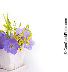 Flowers on a white background, dark blue hand bells with dew...