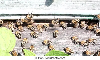Log in to the hive