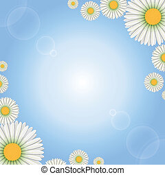 Marguerite flowers - Background with daisies flowers, eps10...