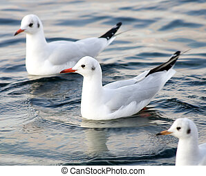 Seagull floating in sea.