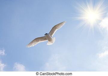 Beautiful seagul. - Beautiful seagull against the blue sky...