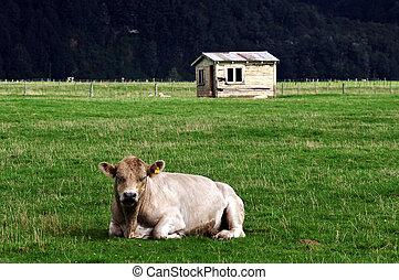 Old Farm House Bull New Zealand - Old farm house building...