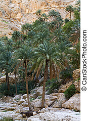 A natural wadi in Oman - A natural wadi in sultanate Oman
