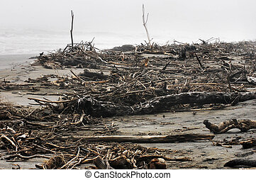 West Coast, New Zealand - Driftwood washed up on the rough...