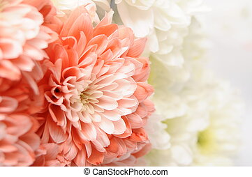 Pink and white flower for background