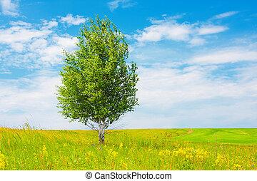 Birch on green meadow