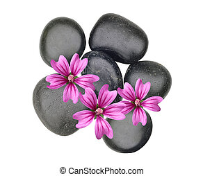 Black spa stones and pink flowers isolated on white
