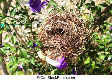 bird nest - close up of empty bird nest