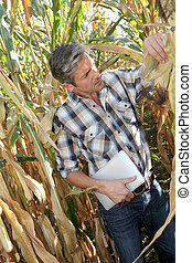 Agronomist in corn field with electronic tablet